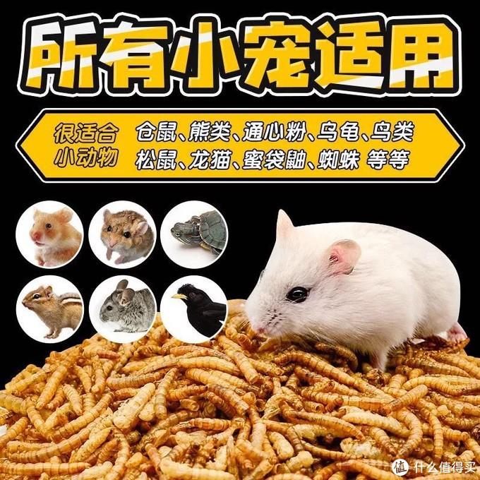 鼠的吃喝玩乐的琐碎—日常