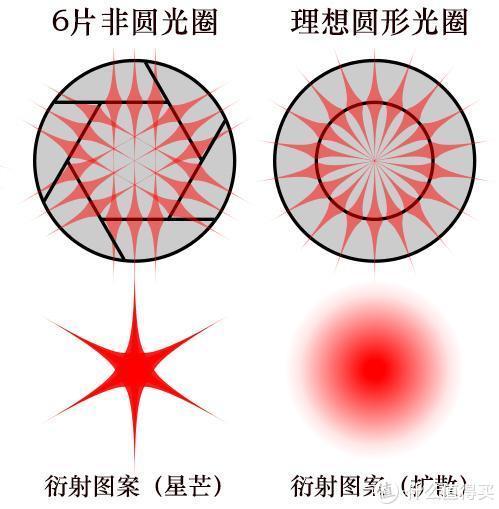 偶数叶片星芒条数和叶片数一致,且叶片越圆星芒越不明显