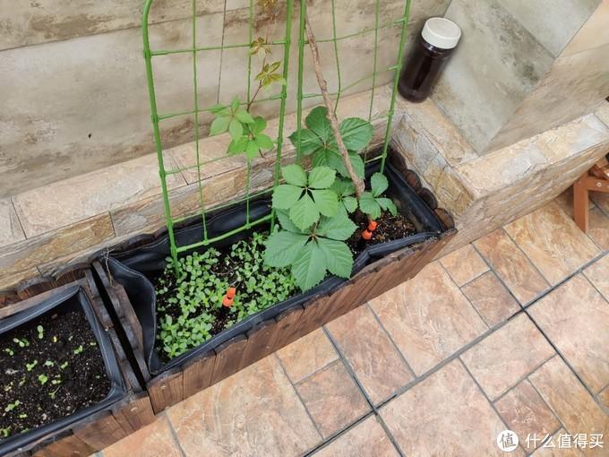 让你家的花草也享受智能生活