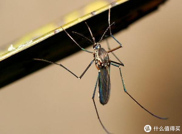 实力对抗夏季蚊虫—青荷防蚊网