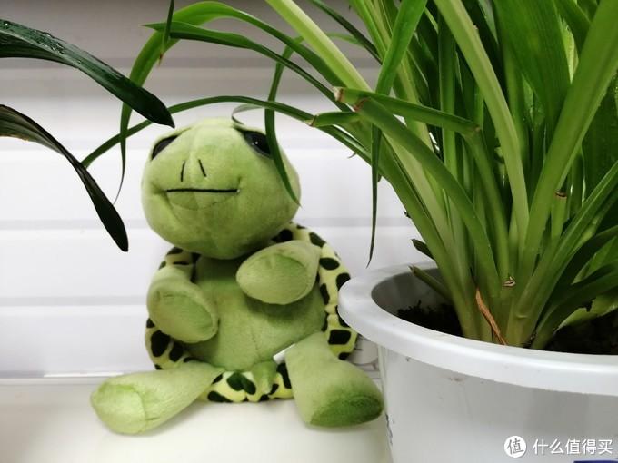 """快来种草啦!""""不管你多么爱答不理都能坚强活下去""""的绿植,让你每天心情day day up !"""