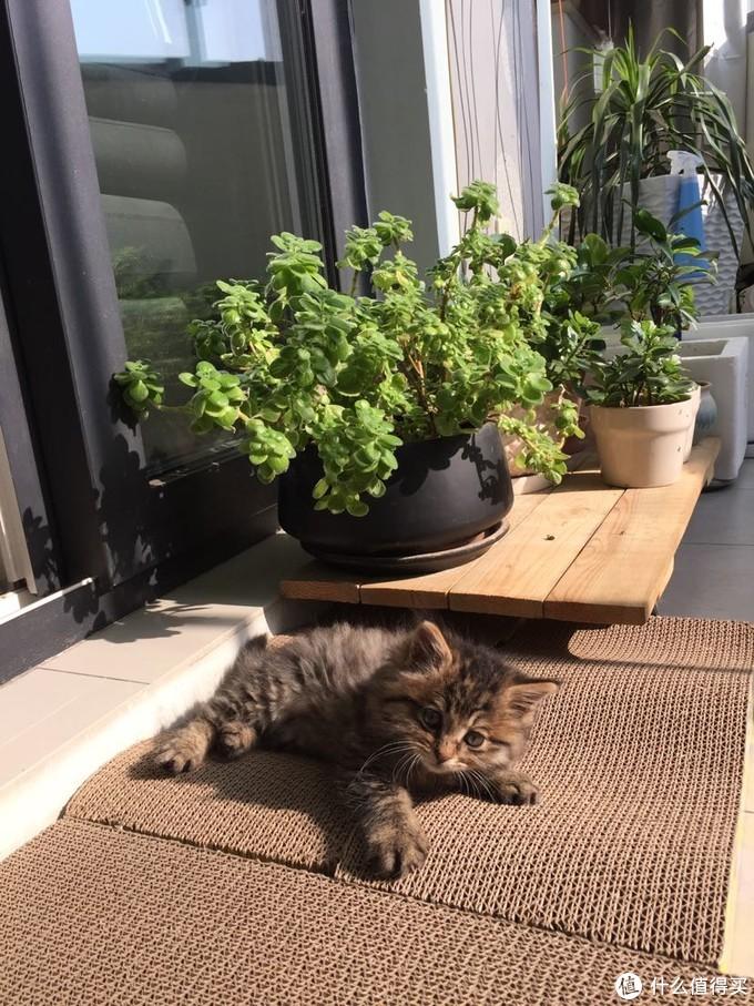 晒太阳可能是猫生物的最大爱好之一。