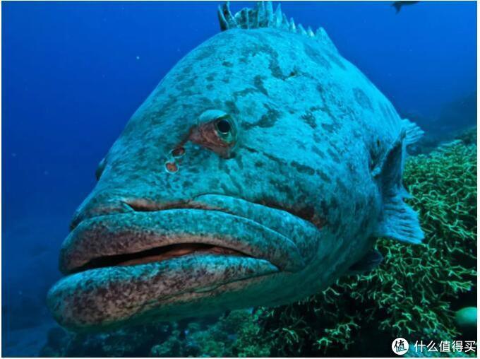 """满脸""""你瞅啥""""的大鱼"""