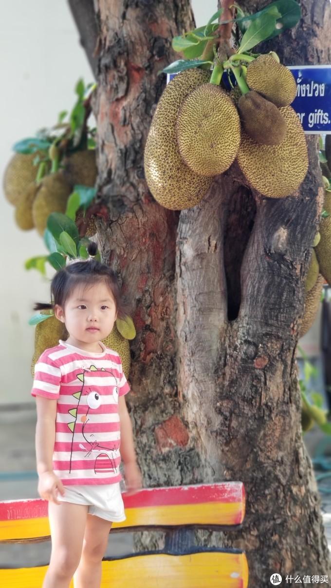 泰国普吉皮皮清迈香港四地16天吃喝玩乐亲子游---清迈篇(上)古城