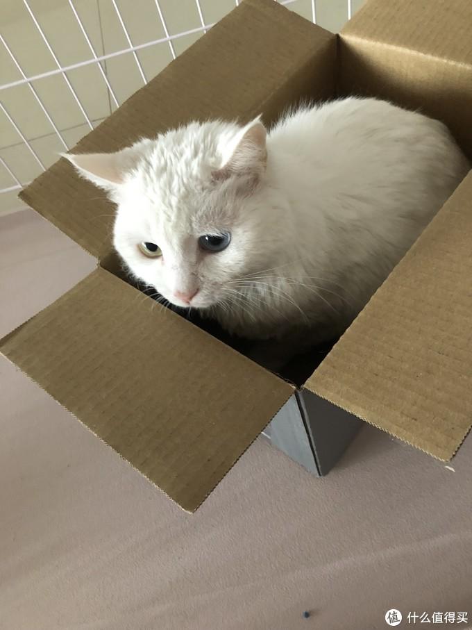 说好的晒物呢???喵~就是想让你们看看我家箱子里长出来的猫~嘿嘿嘿