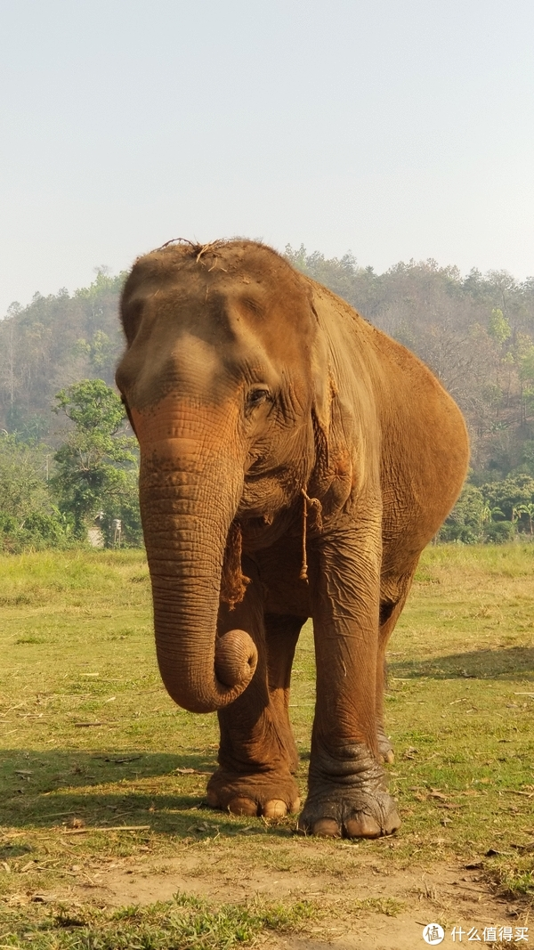 泰国普吉皮皮清迈香港四地16天吃喝玩乐亲子游---清迈篇(中)大象营 夜间动物园,亲子游不得不去