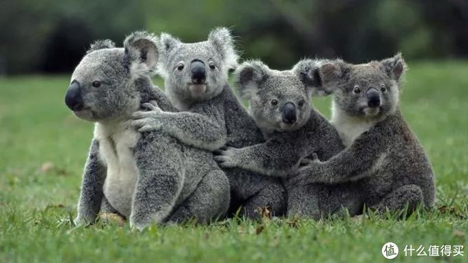 游乐场、动物园、主题酒店,全球六大亲子目的地推荐!