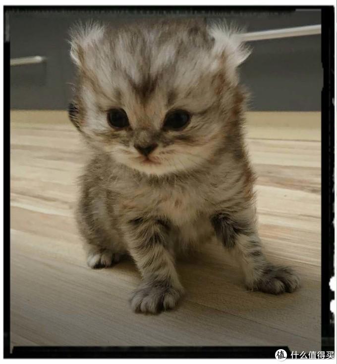 接小猫回家!以下几点一定要注意!