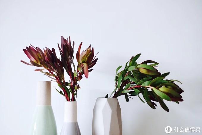 买了不吃亏买了不上当,这些鲜花自然风干也美翻了!