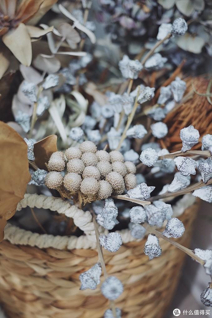 珊瑚果和尤加利果