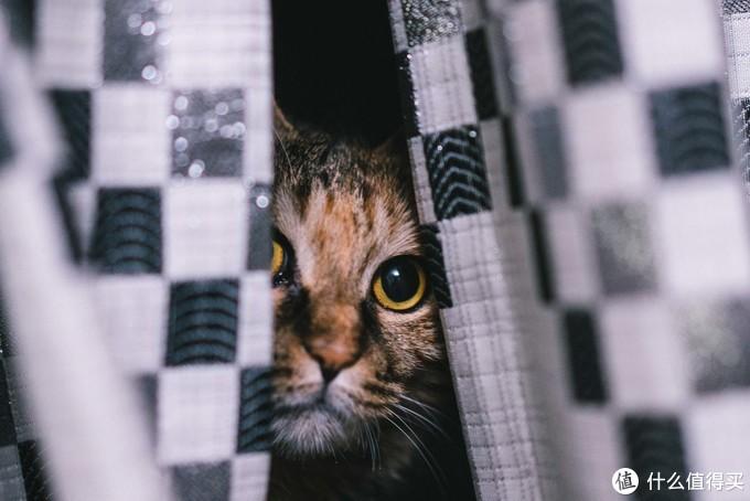 家有宠物如何拍?(图多傻猫)