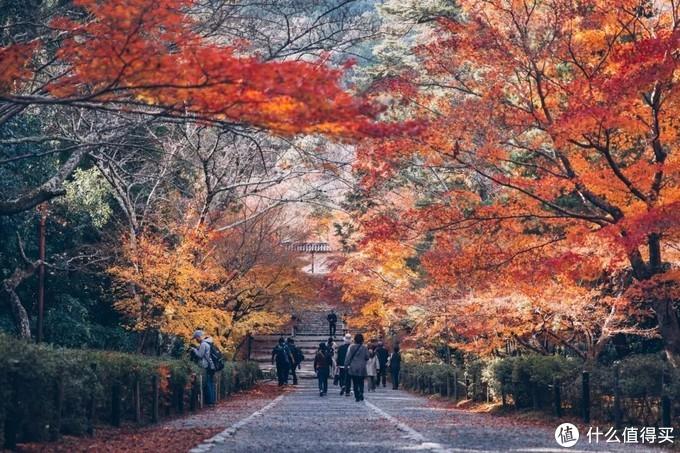 日本京都赏枫季,顺便打卡最新米其林餐厅!