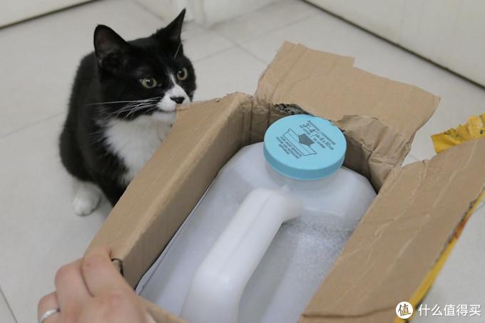 做三只猫的铲屎官,除了勇气你还需要:雀巢普瑞纳 TIDY CATS 即效除臭猫砂
