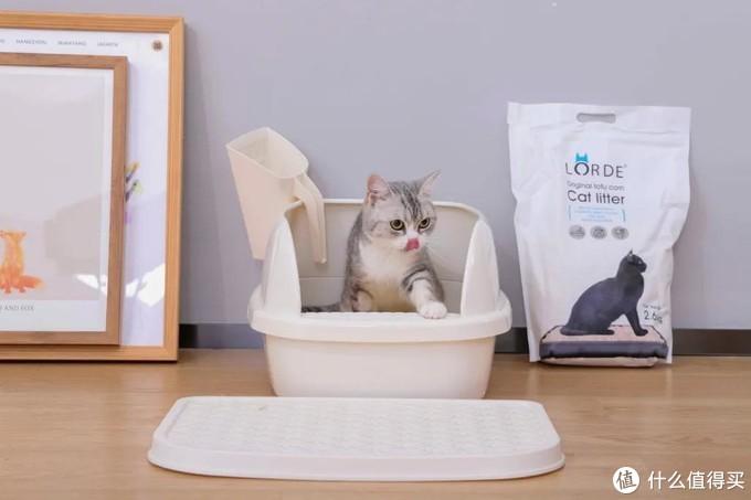 """为了搞清楚猫厕所,我们请来了自家""""主子""""并捂鼻亲测"""