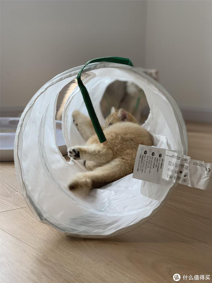 让主子开心就可以随意吸它啦-雀巢普瑞纳 TIDY CATS泰迪即效除臭型猫砂体验