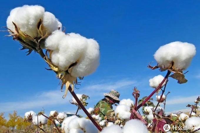 多么  非【常】新疆长绒棉被
