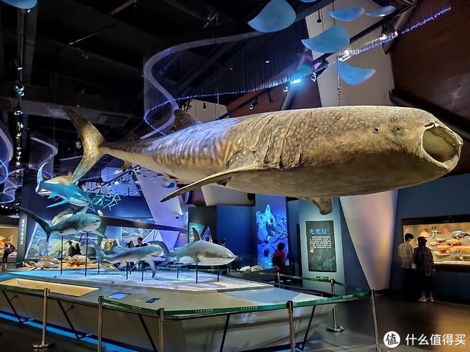 国家海洋博物馆一日游