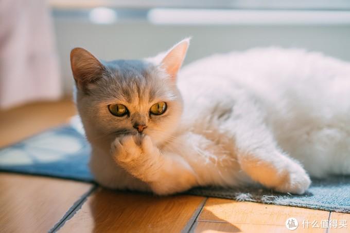 除臭力完全OK的一款猫砂 让你从此爱上铲屎~