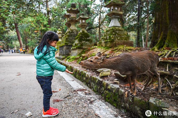 去奈良旅游你应该选择哪种交通卡券,到了之后如何玩好奈良小鹿
