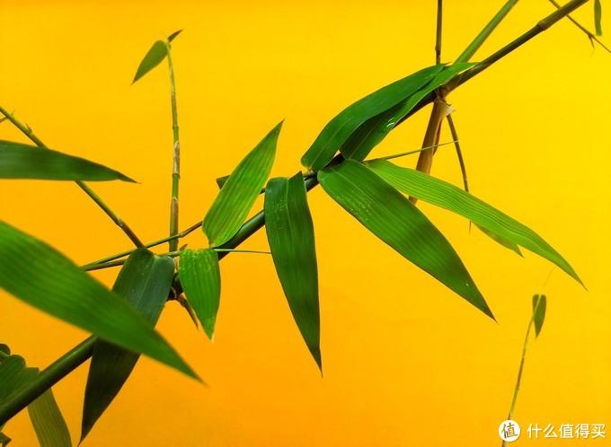 竹子的叶片