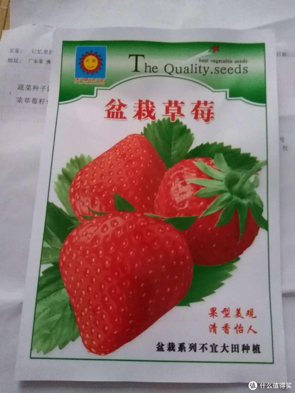 我的草莓种植日记