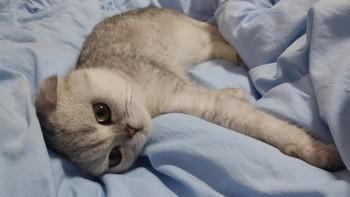 """无尘除臭,虽然贵,但""""真香""""——雀巢普瑞纳 TIDY CATS猫砂体验"""