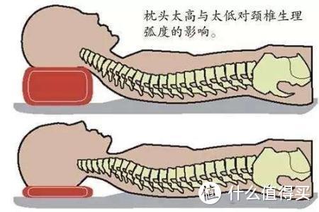 太高或太低的颈椎状态