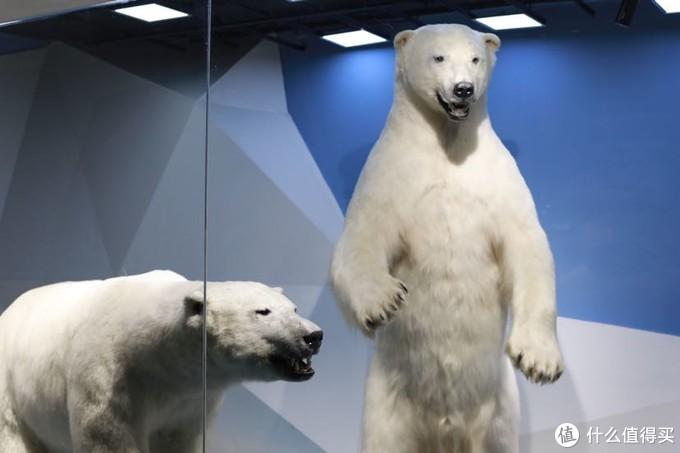 小蛮熊,我们一起去看水母吧!