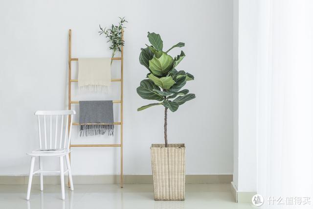 客厅就养这4种植物,大气又漂亮