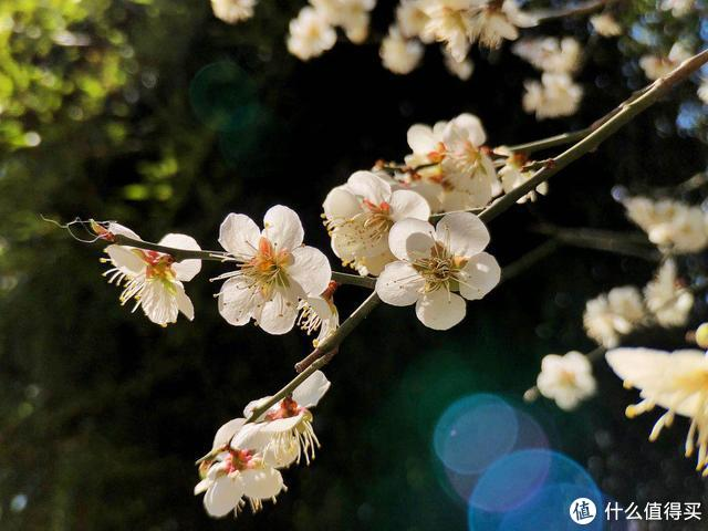如何用手机拍出惊艳朋友圈的花卉照片?