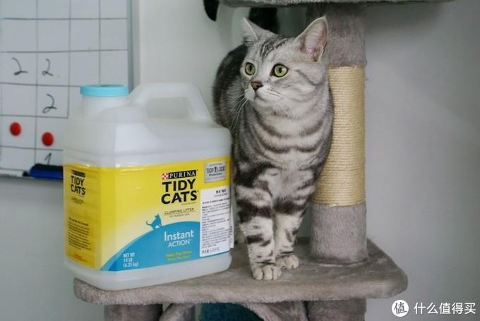 深度洁癖铲屎官的终极选择--TIDYCATS泰迪 即效除臭型猫砂,空气清新尽情吸猫~