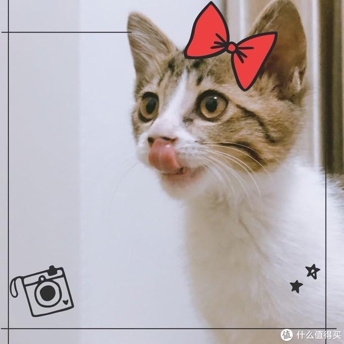 最后还是小猫猫镇楼啦!下次洗澡他也可以用上戴森啦哈哈哈