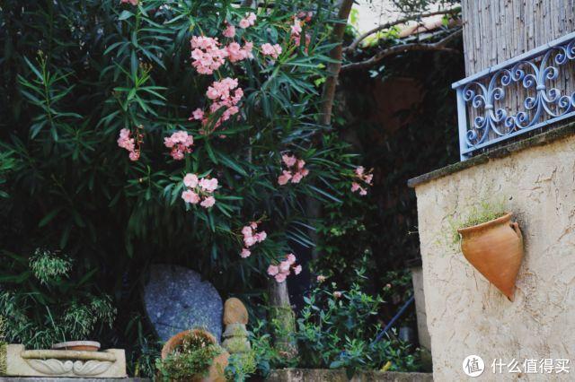 又一年花季,去普罗旺斯看薰衣草,把心留在最浪漫的花海!