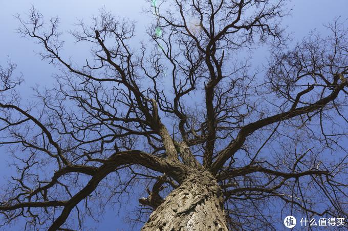 蓝天和树原图