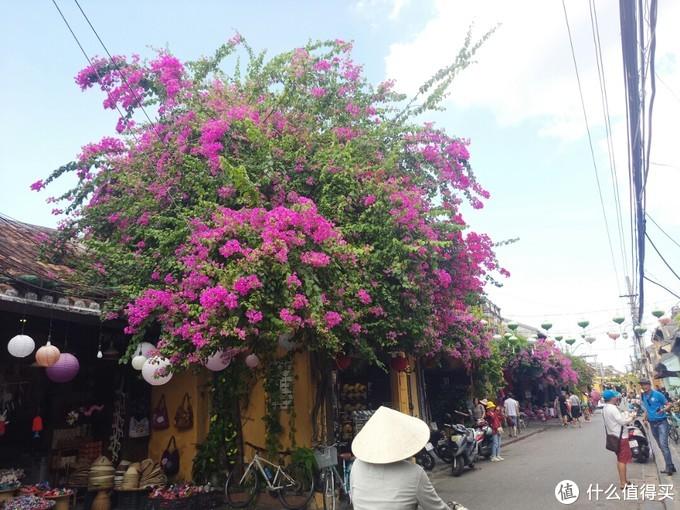 应该是紫藤花吧,大街小巷随处可见,很漂亮