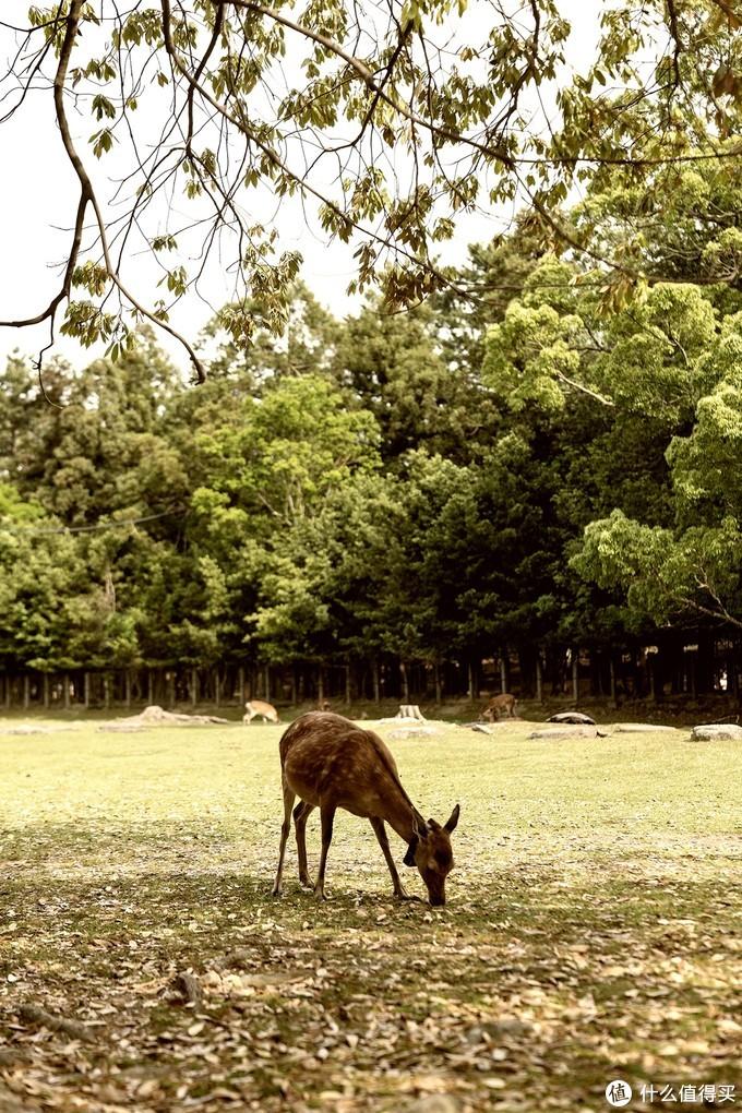 慢京都与奈良鹿,旅行,有时候一定要慢下来才更有趣
