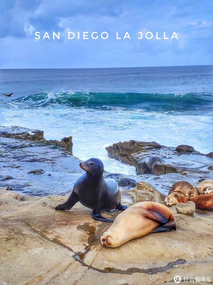 我终于分清楚海狮和海豹了