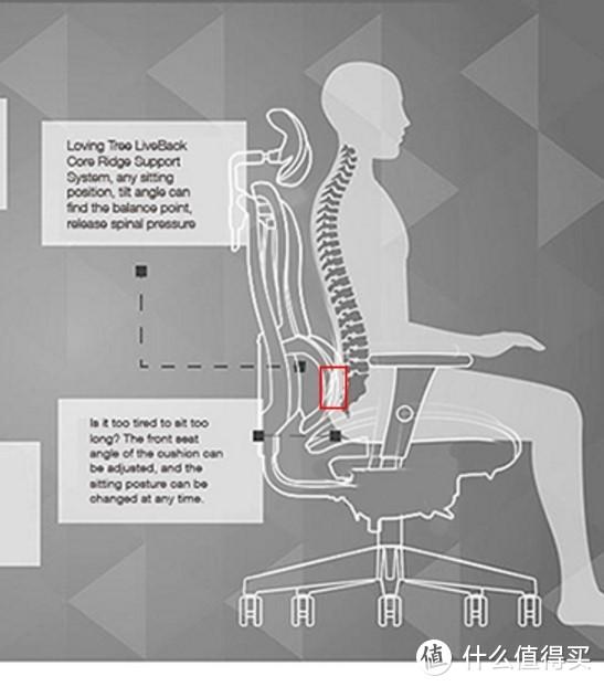 这是金豪类腰背分离设计直坐时候能够支撑的面积