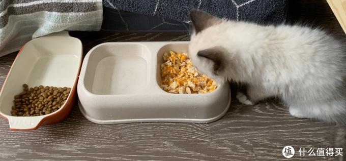第一天来的时候,猫粮和猫饭放在一起,果断选择猫饭,狼吞虎咽吃了很多。