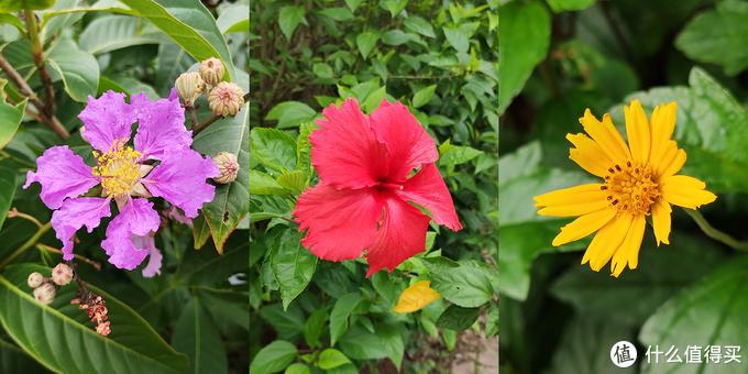 植物花朵色彩