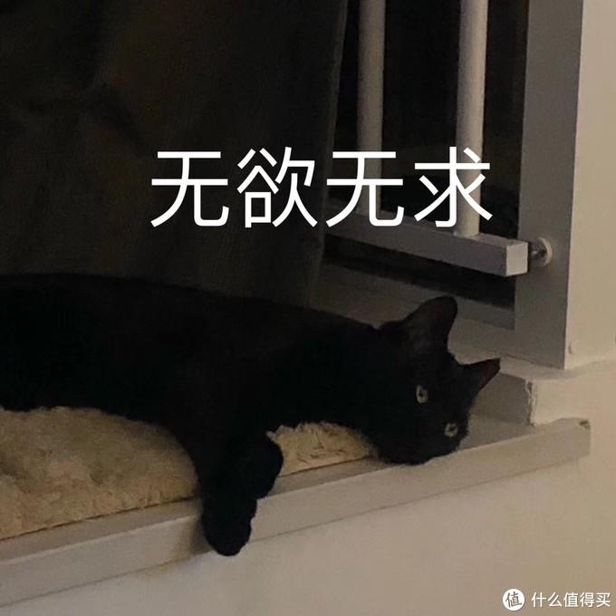 大型晒猫现场,第一次养猫需要准备什么