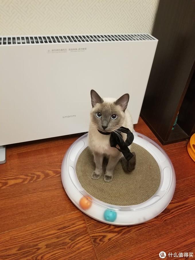 小佩  游乐园  猫抓板兼转盘  美观度很高的装备  标价99  搞活动47京东买的  猫有时玩 有时不玩  玩起来很吵 很吵 很吵 听说有风险(我感觉没啥问题) 谨慎选购