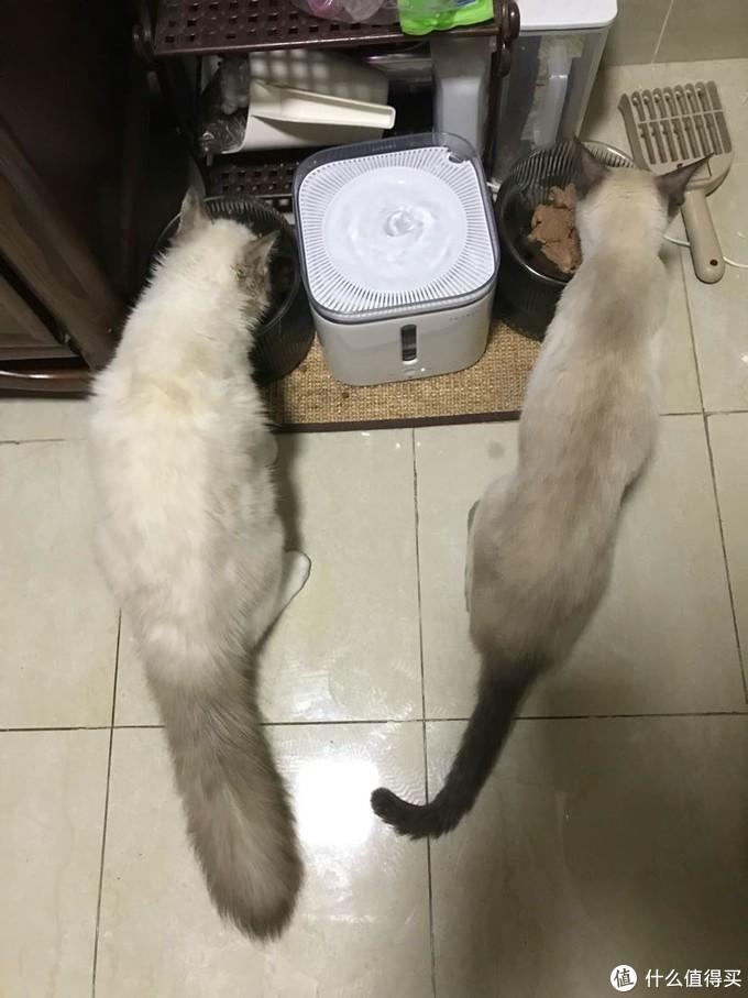 最左 最右  尾巴生活 furrytail 猫碗