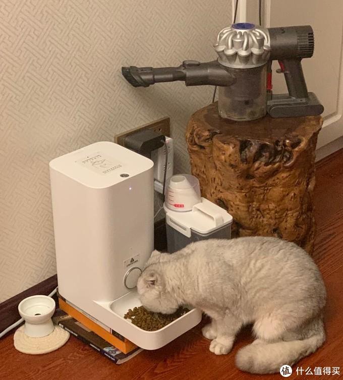 左下 小佩投食机 479入  运行近8个月 未曾卡粮 可靠性高 三只猫 大概10天加次粮 可惜下面的碗是塑料的 需要注意清洁