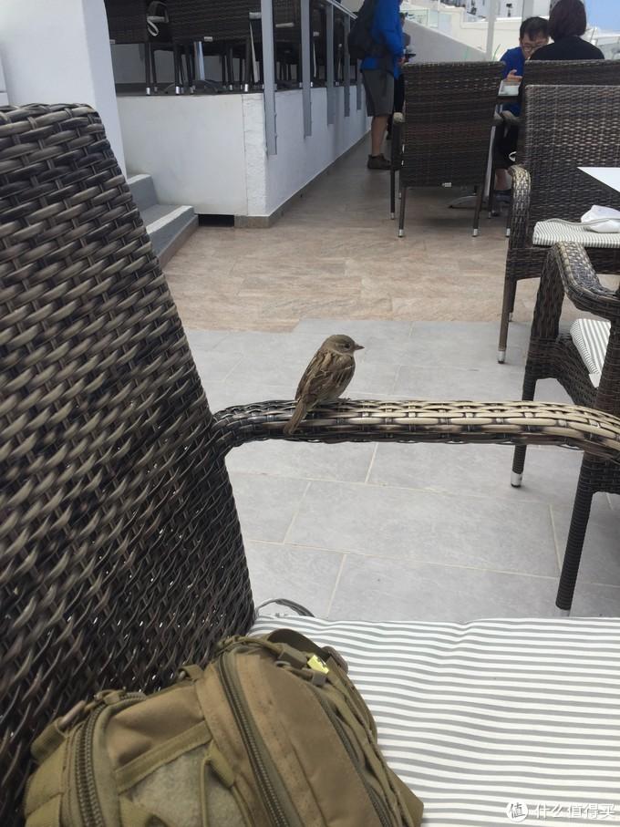 用餐期间一只小鸟落在旁边椅子上,岛上动物真如此大胆