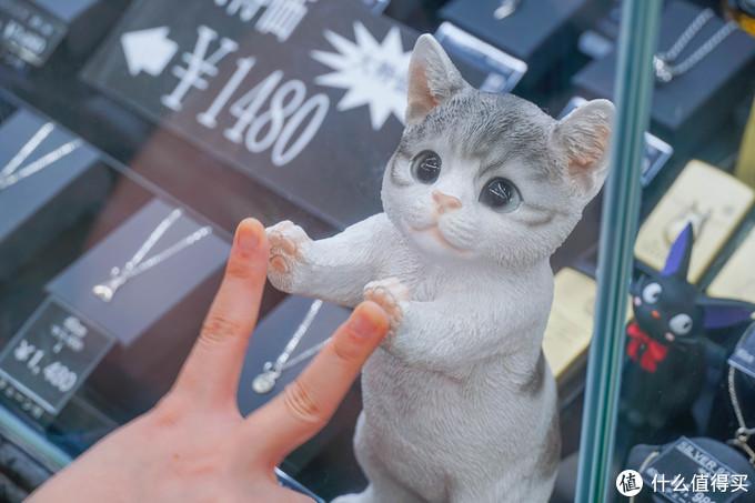 撸不到柴的我,只能跟小猫咪隔玻璃击掌。。