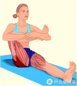 用進廢退,潛力無窮——了解我們的身體奧秘之肌肉篇