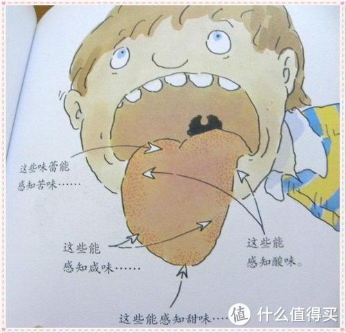 舌头感知区域