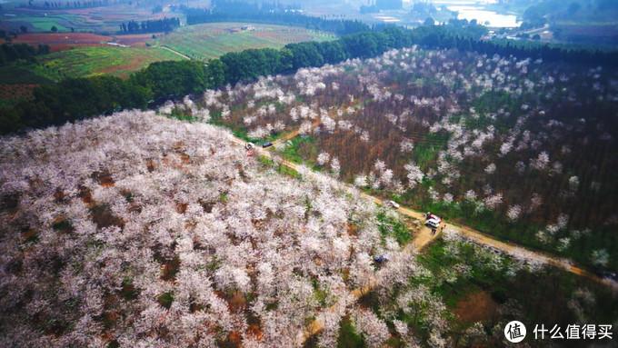 2013年的樱花园