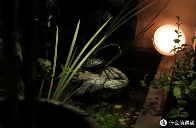 2500K的低亮度照明让龟龟更加放松